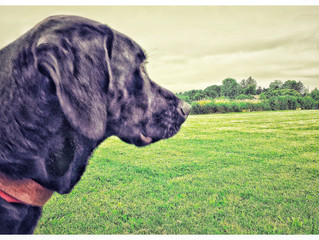 Some have said how about being a dog photographer