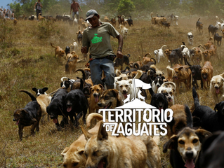 Territorio de Zaguates-Please check it out