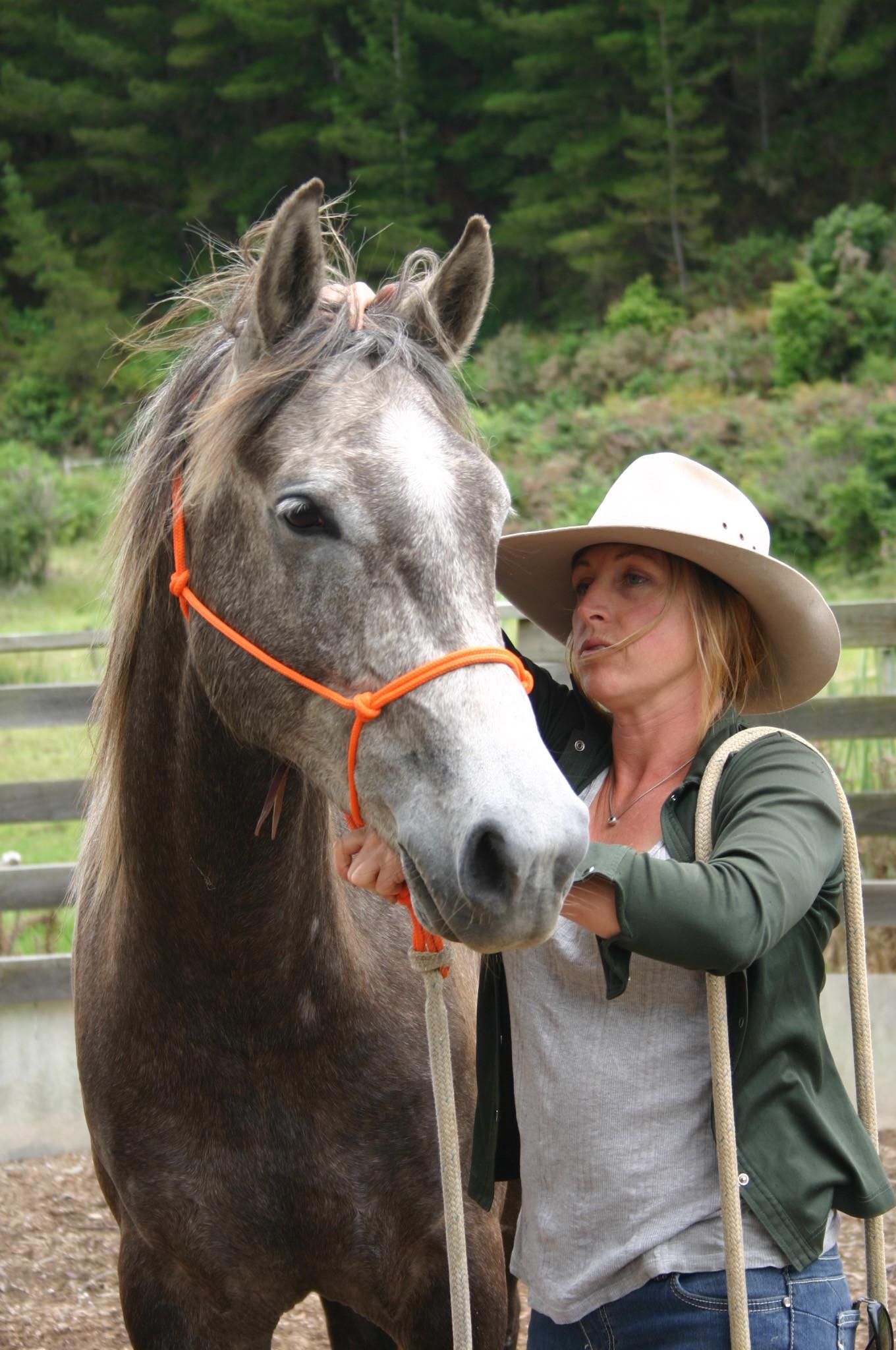 Horse Treatment Session