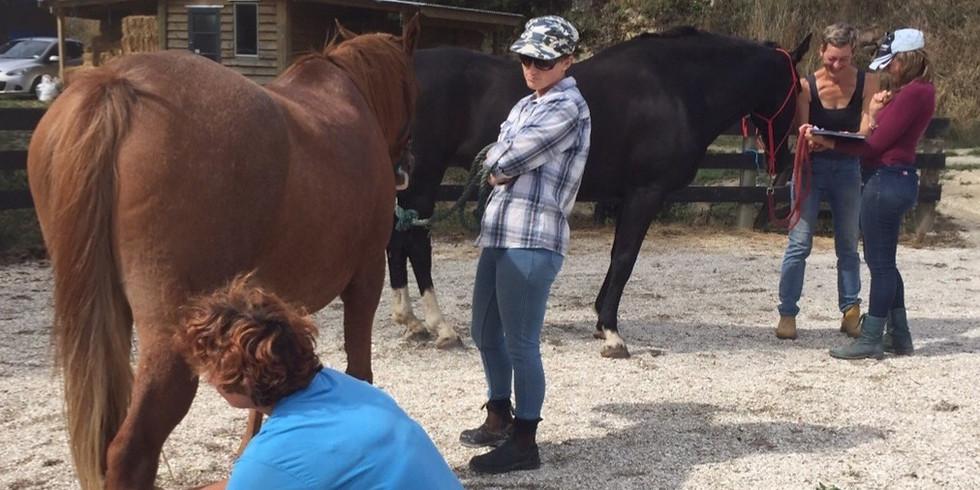 Equine Foundation Course