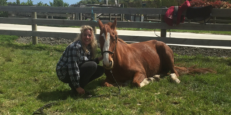 Equine Practitioner Course