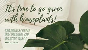 Go Green with House Plants this Earth Day!
