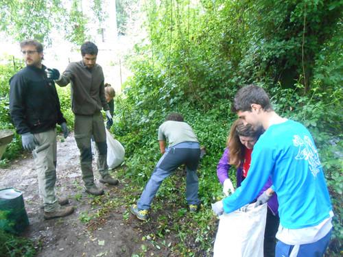 Flora exótica invasora en el Parque Natural Sierra de Grazalema