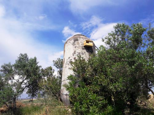 Fomento de la biodiversidad en espacios agrícolas: Jornada III - Olivar Torremelgarejo.