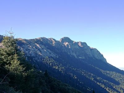 Encuentro temático: los bosques maduros