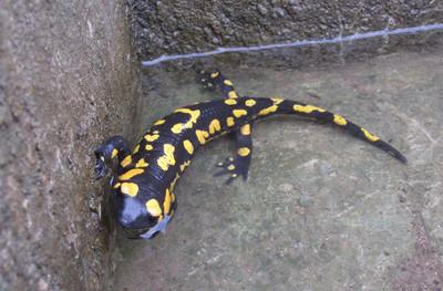 Acción Formativa. Fuentes de Vida: Los Anfibios del Parque Natural Sierra de Grazalema