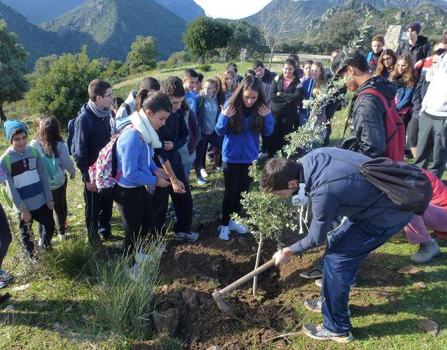 Reforestacion Monte Prieto Sierra Grazalema