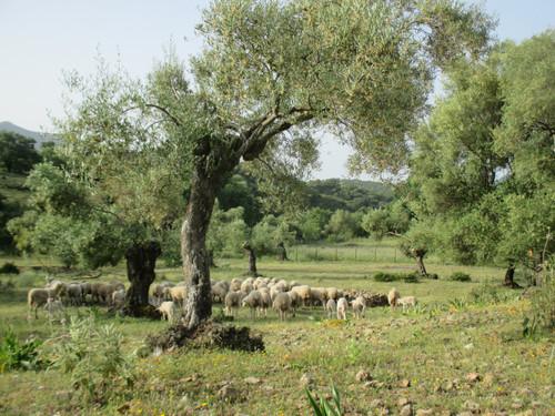 La finca custodiada por O-Live es declarada Reserva Ecológica
