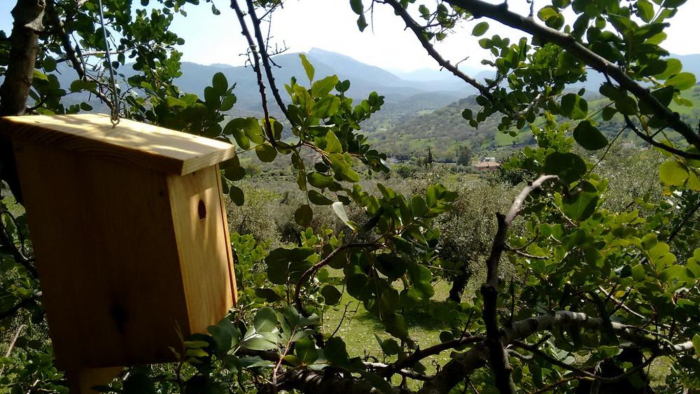 Caja nido en algarrobo