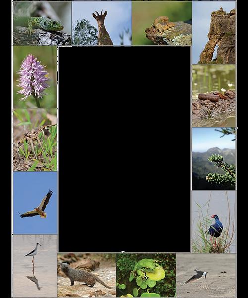 Biodiversity Sierra de Cádiz
