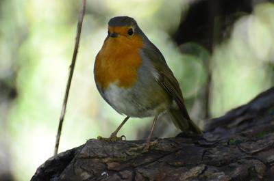 Fomento de la biodiversidad en espacios agrícolas | Anillamiento científico