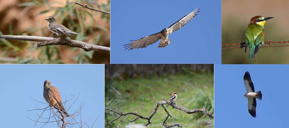 Aves Visita de la Reserva Ecológica El Herrador