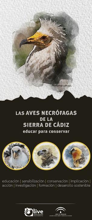Las aves necrófagas de la Sierra de Cádiz Educar para conservar