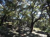 Mediterranean forest Sierra de Cádiz