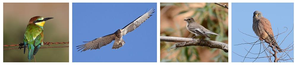 Aves de la Reserva Ecológica El Herrador