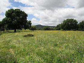 Reserva Ecológica El Herrador