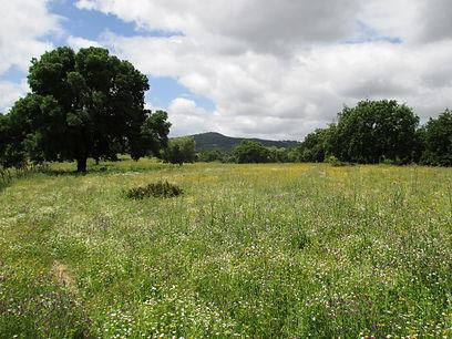 Reserva Ecológica O-Live