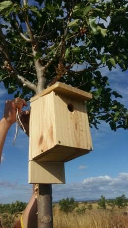 Caja nido para aves insectívoras