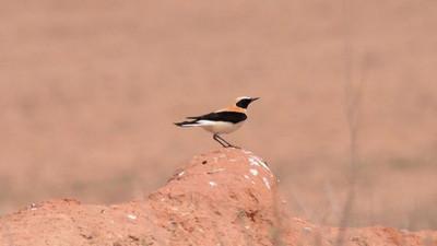 Conocemos a los miembros de la Andalucía Bird Society
