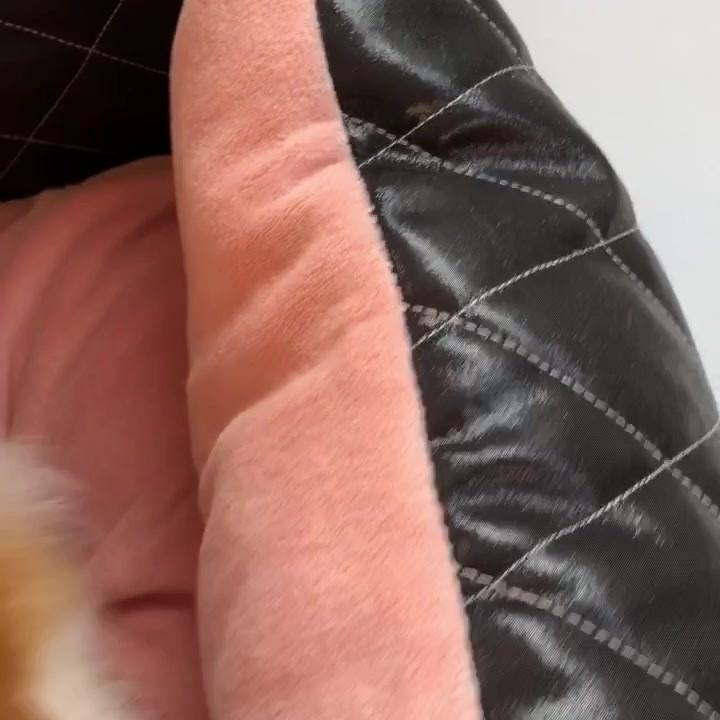 Designer Pretty Pet Gallery
