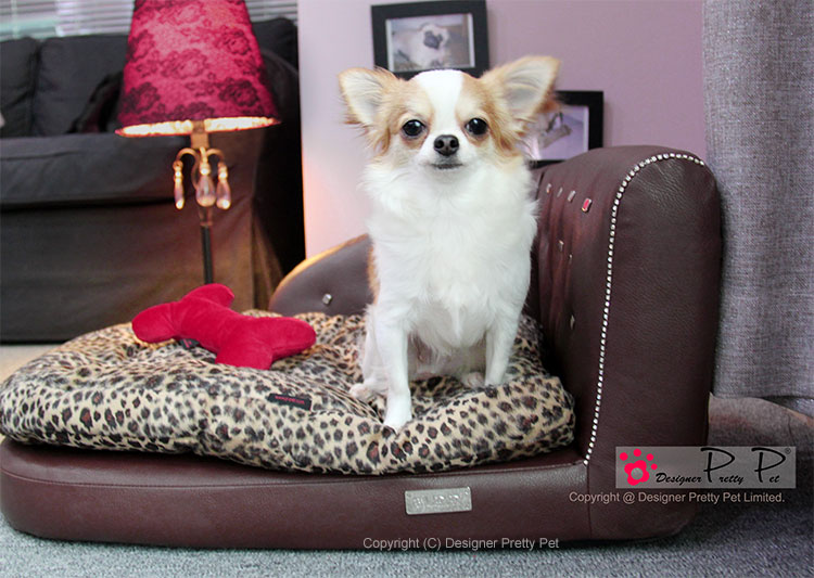 Pretty Pet Sofa Bed
