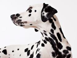 ששת הטיפים של mills להחזרת כלבכם למצב גופני תקין