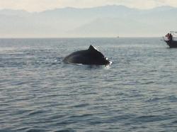 Jody's Bucerias Whale Watching (3)
