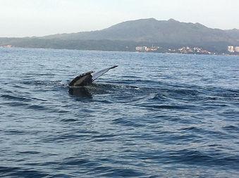 Bucerias Whale Watching Wildlife Jody's Bucerias