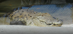 El Cora Crocodile farm Bucerias Esperanz