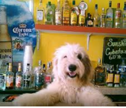SunShine Bar Bucerias Toby