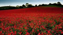 We Remember....