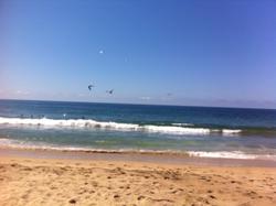 Jody's Bucerias Beach Birds