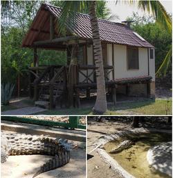 El Cora Crocodile farm collage