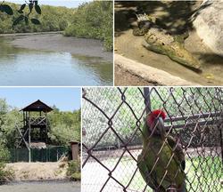 El Cora Crocodile farm Bucerias collage2