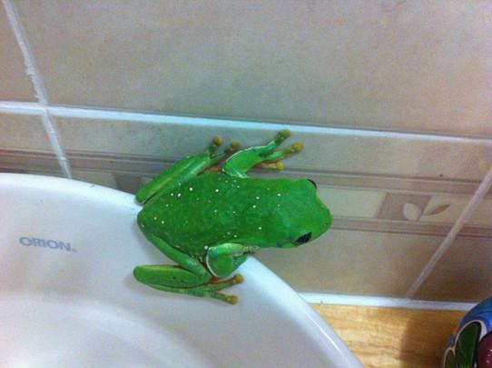 Well, Hello Mr Frog !