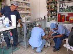 Peace Animals Bucerias Clinic