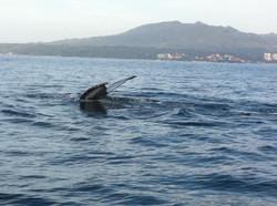 Jody's Bucerias Whale Watching 2
