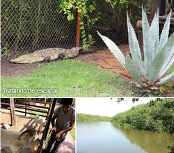 El Cora Crocodile farm Bucerias collage.