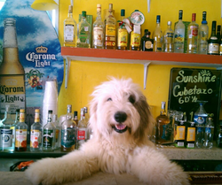 Jody's Bucerias Sunshine Bar and Toby