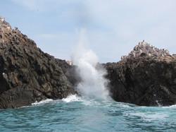 Jodys Bucerias Sea Tours  (3)
