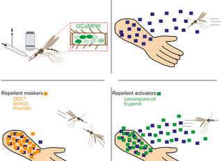 New paper in Current Biology