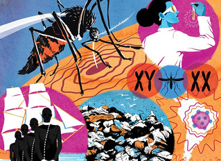 The Stranger Magazine on Aedes mosquitoes and the Zika virus