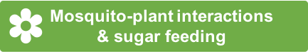 1-SugarFeeding.png