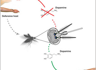 Our paper on learning in mosquitoes is out in Current Biology!