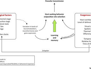 Our review paper on Learning and Memory in disease vector insects is out!