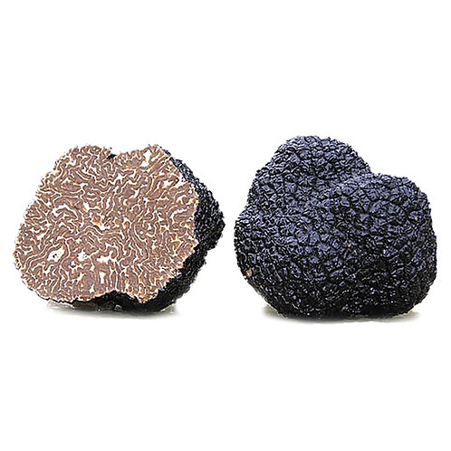 Fresh Black Burgundy Perigord Truffle 3.5 oz (100g)