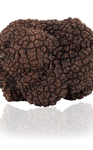 Fresh Black Summer Truffle 3.5oz (100g)