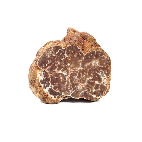 Fresh Bianchetto Truffle Marzuolo