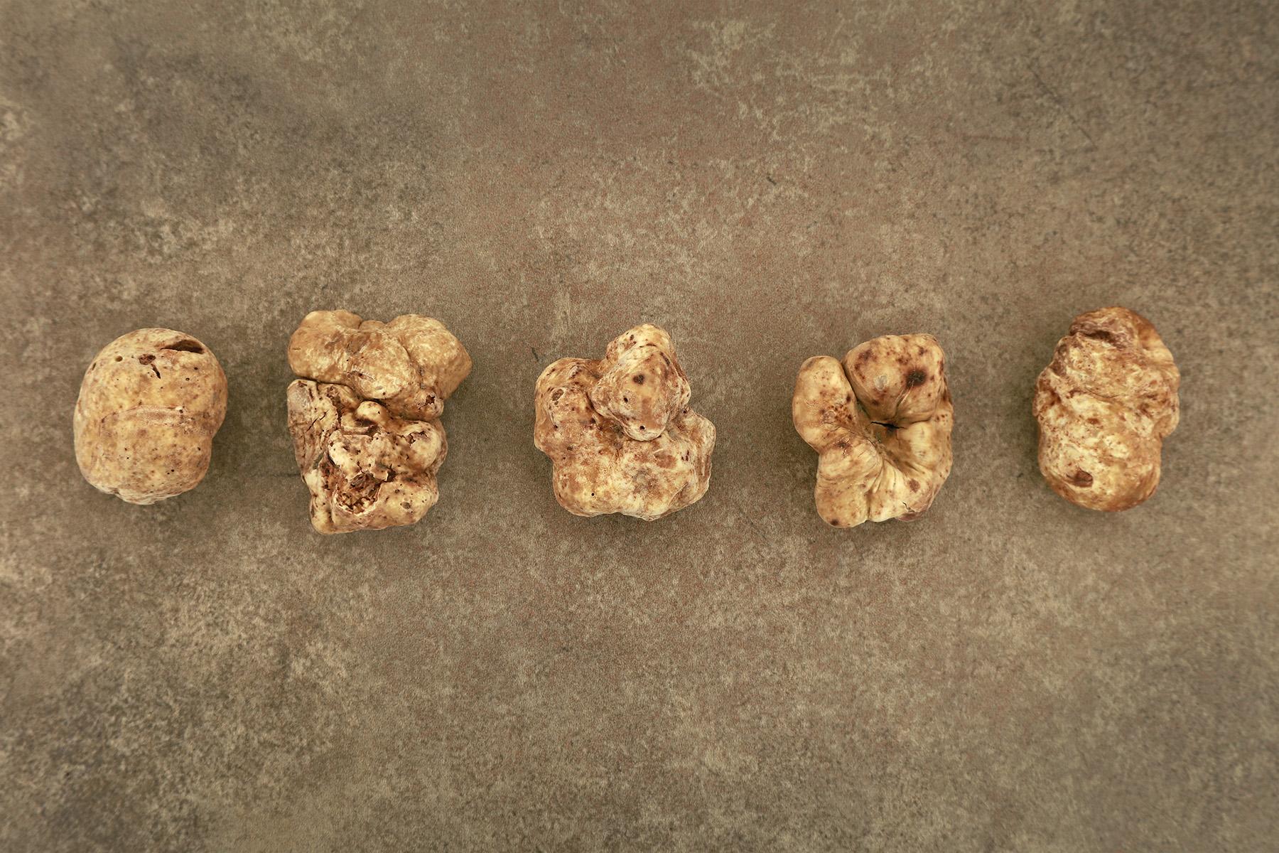 Truffles-USA-white-alba-truffles_001
