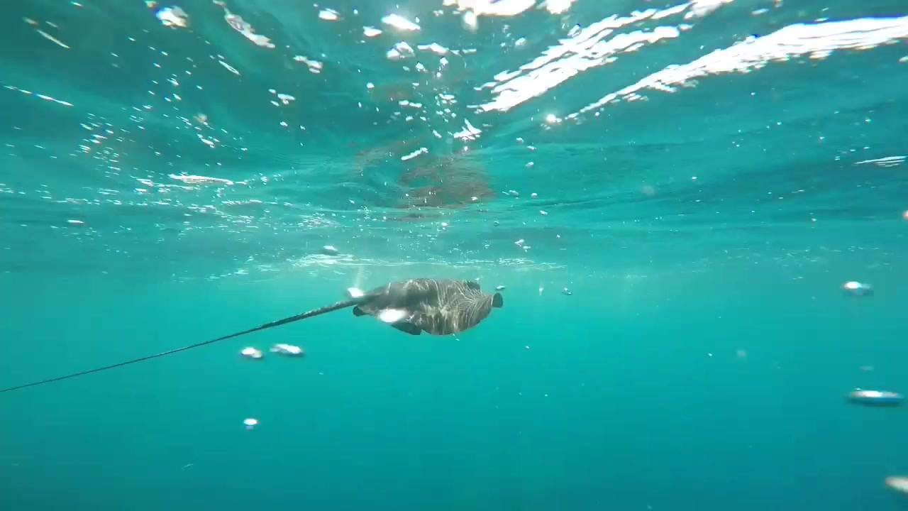 Calacerrada +snorkeling